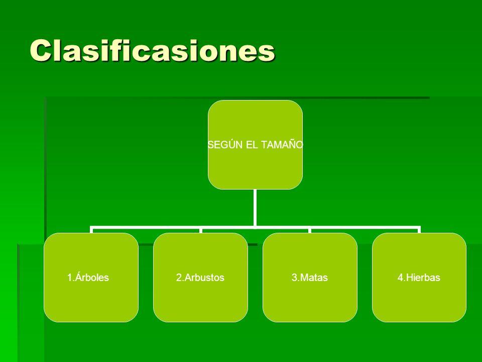 Clasificasiones SEGÚN EL TAMAÑO 1.Árboles2.Arbustos 3.Matas4.Hierbas