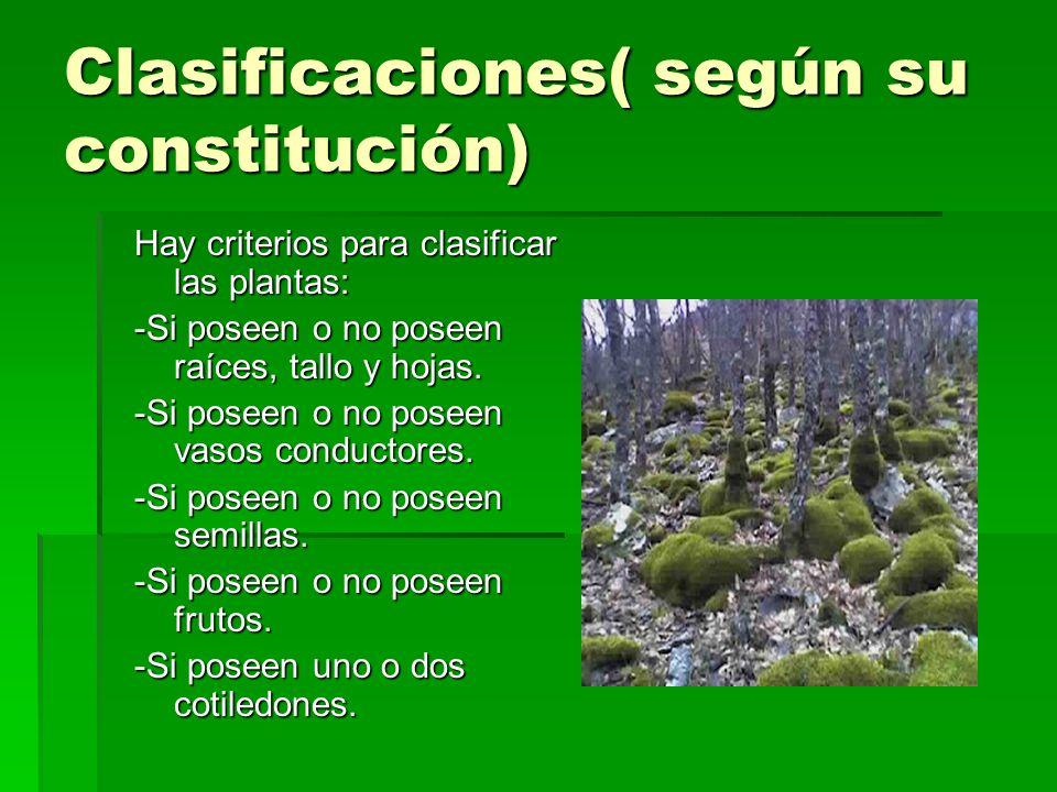 Clasificaciones( según su constitución) Hay criterios para clasificar las plantas: -Si poseen o no poseen raíces, tallo y hojas. -Si poseen o no posee