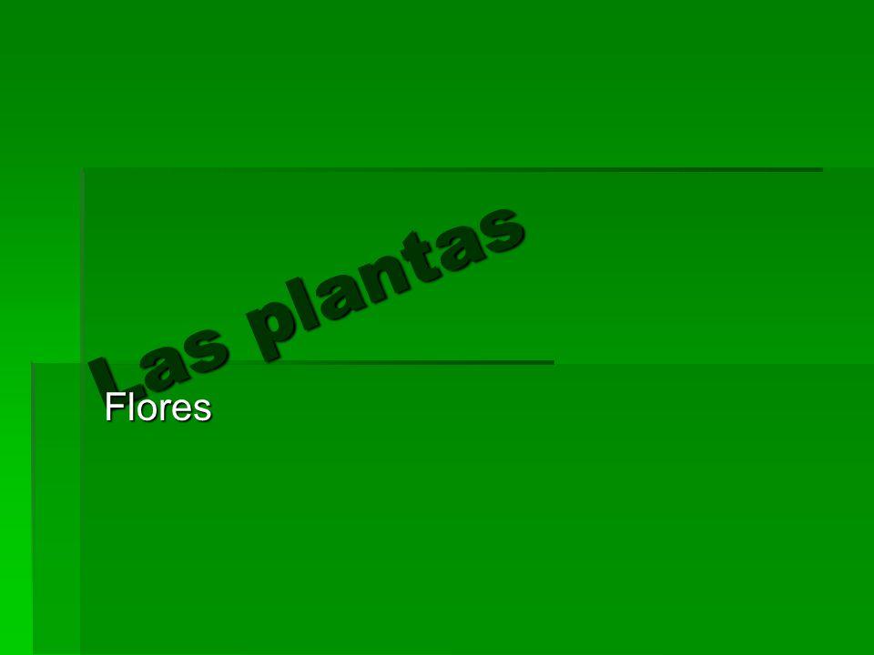 Las plantas Flores