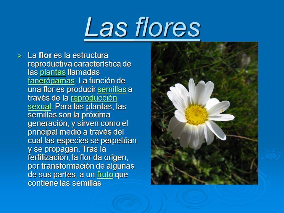 La flor es la estructura reproductiva característica de las plantas llamadas fanerógamas.