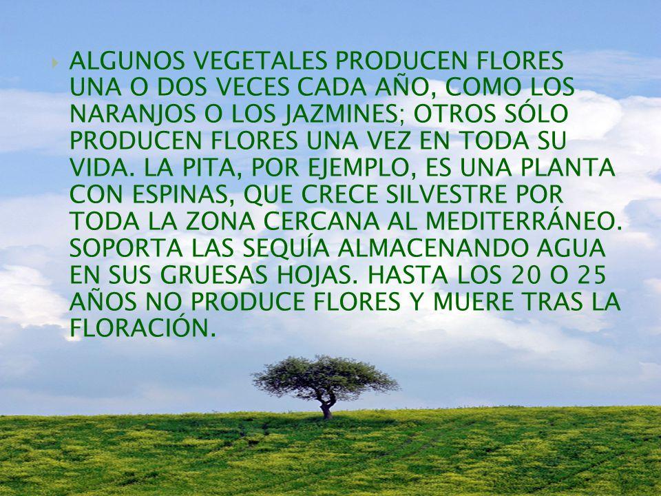 LA MAYOR PARTE DE LAS ESPECIES VEGETALES SE REPRODUCE MEDIANTE FLORES.