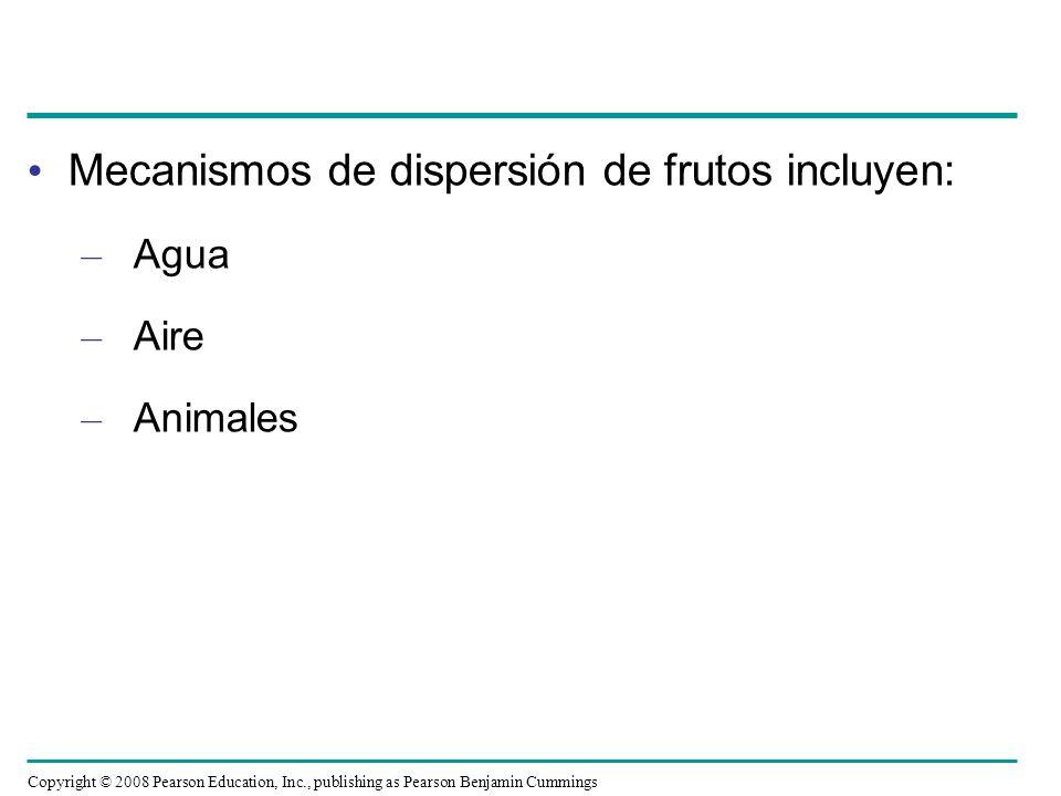 Mecanismos de dispersión de frutos incluyen: – Agua – Aire – Animales Copyright © 2008 Pearson Education, Inc., publishing as Pearson Benjamin Cumming