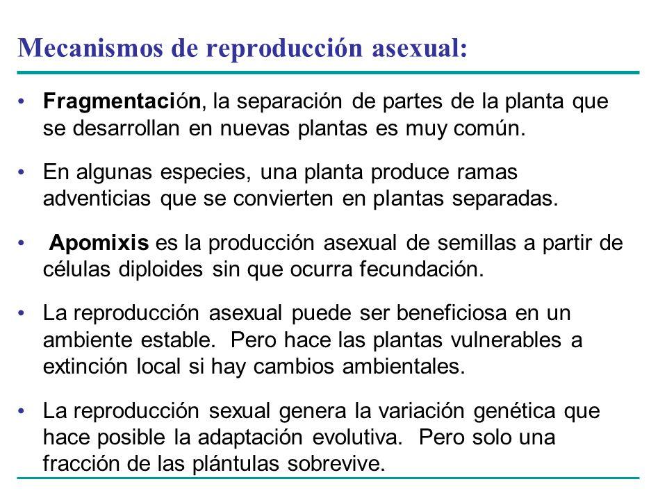Mecanismos de reproducción asexual: Fragmentación, la separación de partes de la planta que se desarrollan en nuevas plantas es muy común. En algunas