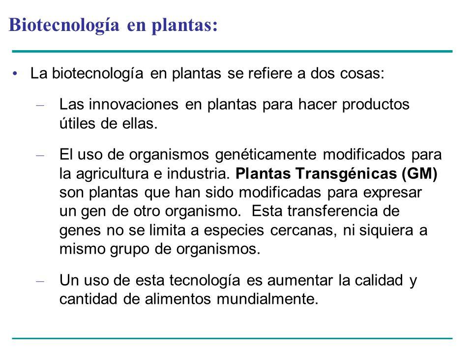 Biotecnología en plantas: La biotecnología en plantas se refiere a dos cosas: – Las innovaciones en plantas para hacer productos útiles de ellas. – El