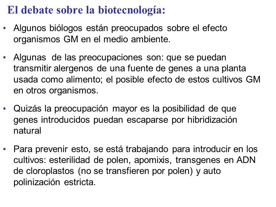 El debate sobre la biotecnología: Algunos biólogos están preocupados sobre el efecto organismos GM en el medio ambiente. Algunas de las preocupaciones