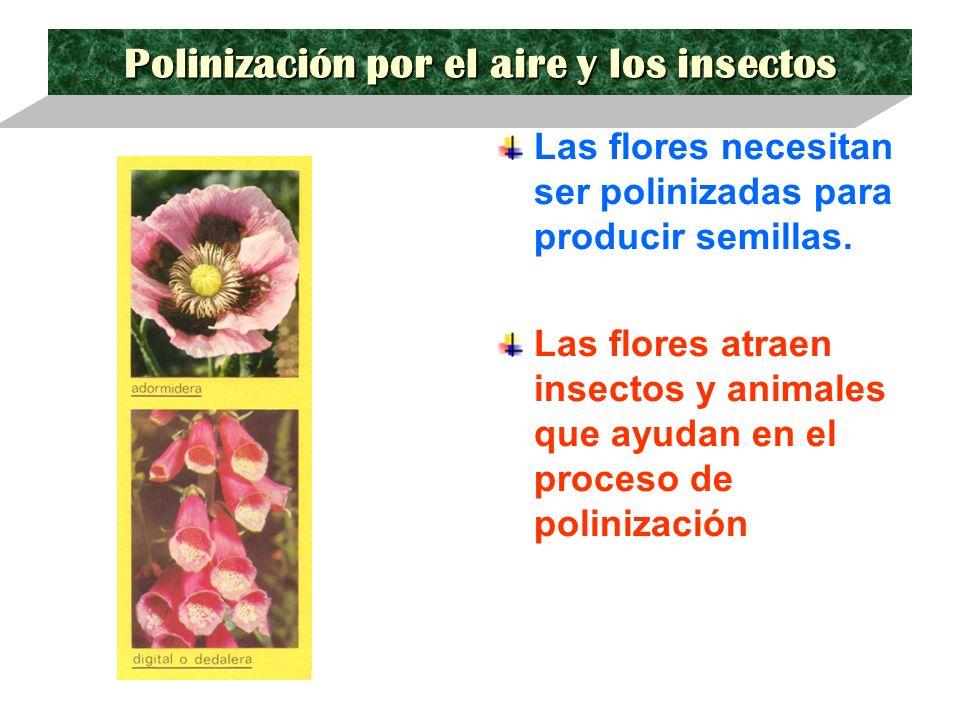 Polinización por el aire y los insectos Las flores necesitan ser polinizadas para producir semillas. Las flores atraen insectos y animales que ayudan
