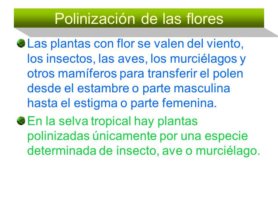 Polinización de las flores Las plantas con flor se valen del viento, los insectos, las aves, los murciélagos y otros mamíferos para transferir el pole