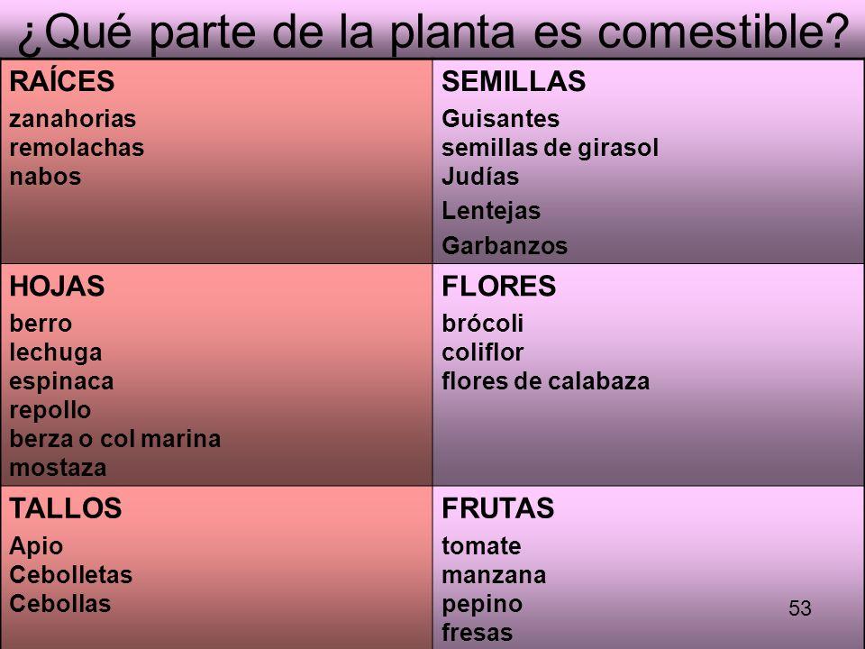 ¿Qué parte de la planta es comestible? RAÍCES zanahorias remolachas nabos SEMILLAS Guisantes semillas de girasol Judías Lentejas Garbanzos HOJAS berro
