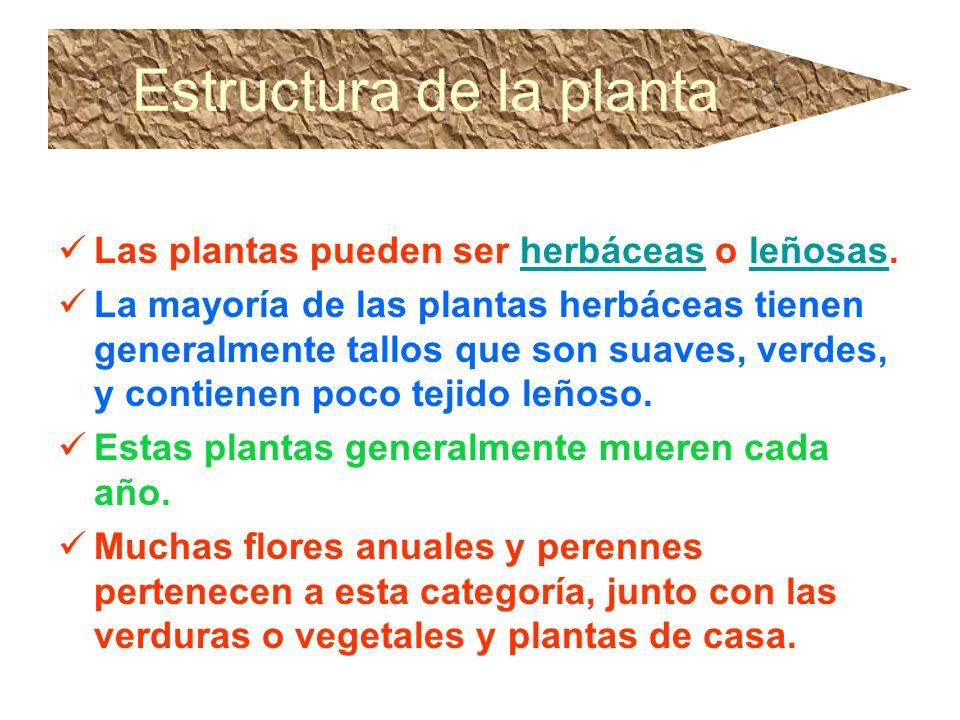 Estructura de la planta Las plantas pueden ser herbáceas o leñosas.herbáceasleñosas La mayoría de las plantas herbáceas tienen generalmente tallos que