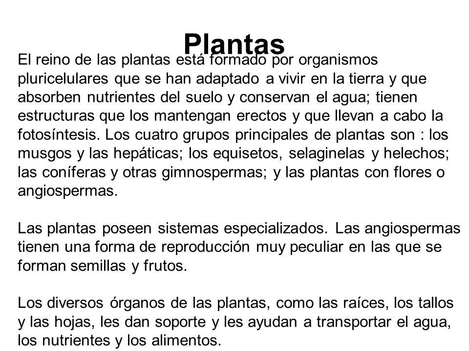 Plantas El reino de las plantas está formado por organismos pluricelulares que se han adaptado a vivir en la tierra y que absorben nutrientes del suelo y conservan el agua; tienen estructuras que los mantengan erectos y que llevan a cabo la fotosíntesis.