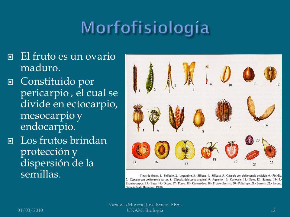 El fruto es un ovario maduro. Constituido por pericarpio, el cual se divide en ectocarpio, mesocarpio y endocarpio. Los frutos brindan protección y di
