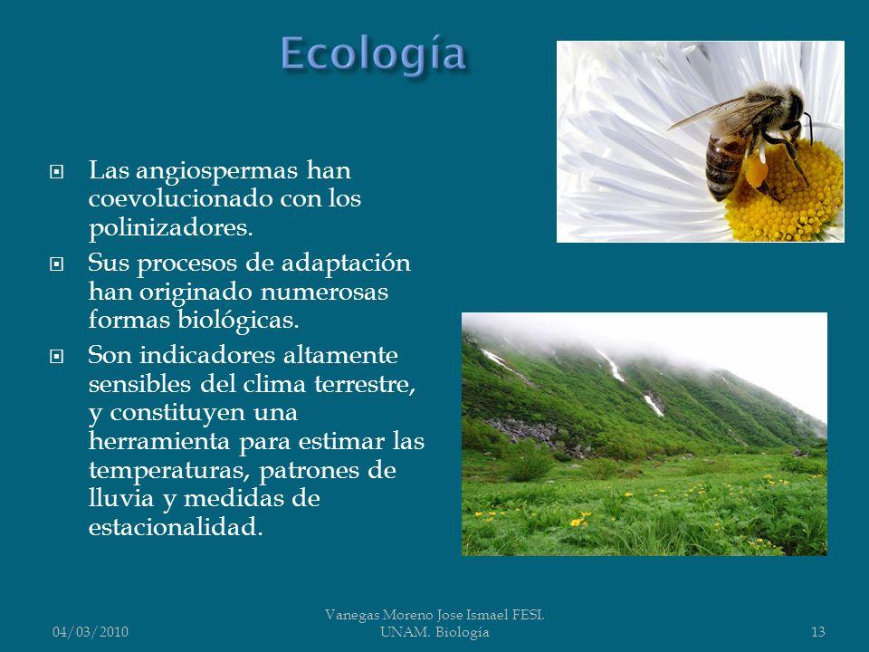 Las angiospermas han coevolucionado con los polinizadores. Sus procesos de adaptación han originado numerosas formas biológicas. Son indicadores altam