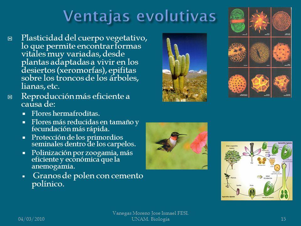 Plasticidad del cuerpo vegetativo, lo que permite encontrar formas vitales muy variadas, desde plantas adaptadas a vivir en los desiertos (xeromorfas)