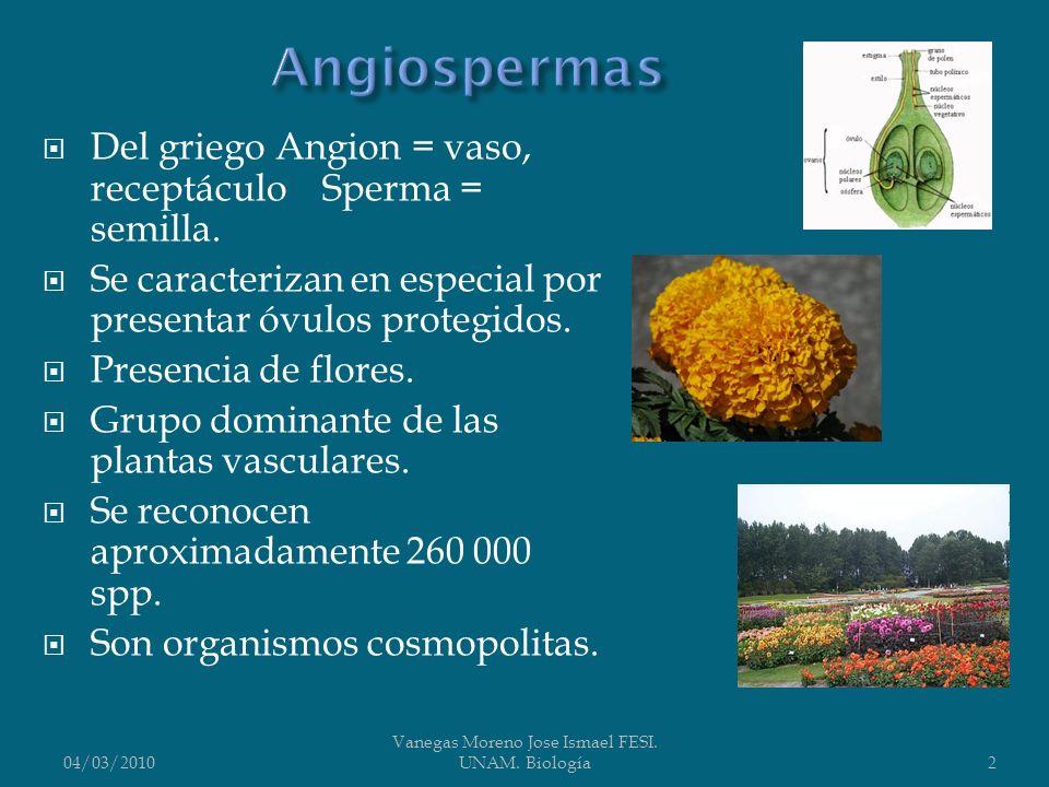 Del griego Angion = vaso, receptáculo Sperma = semilla. Se caracterizan en especial por presentar óvulos protegidos. Presencia de flores. Grupo domina