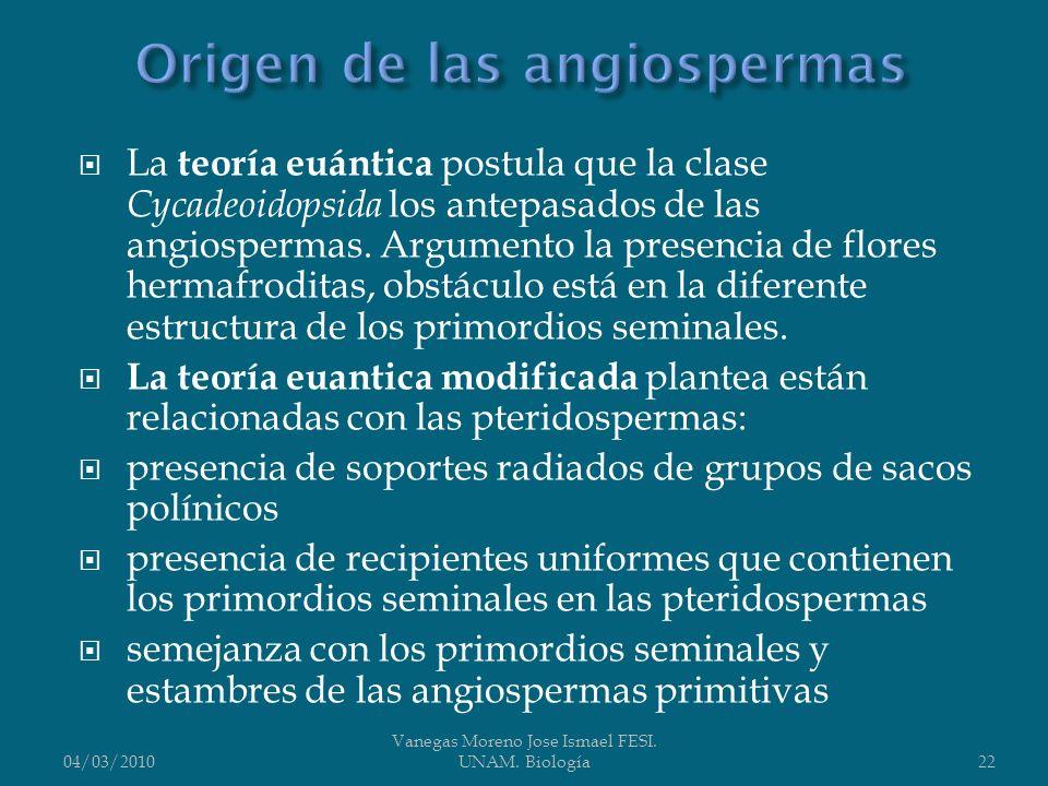 La teoría euántica postula que la clase Cycadeoidopsida los antepasados de las angiospermas. Argumento la presencia de flores hermafroditas, obstáculo