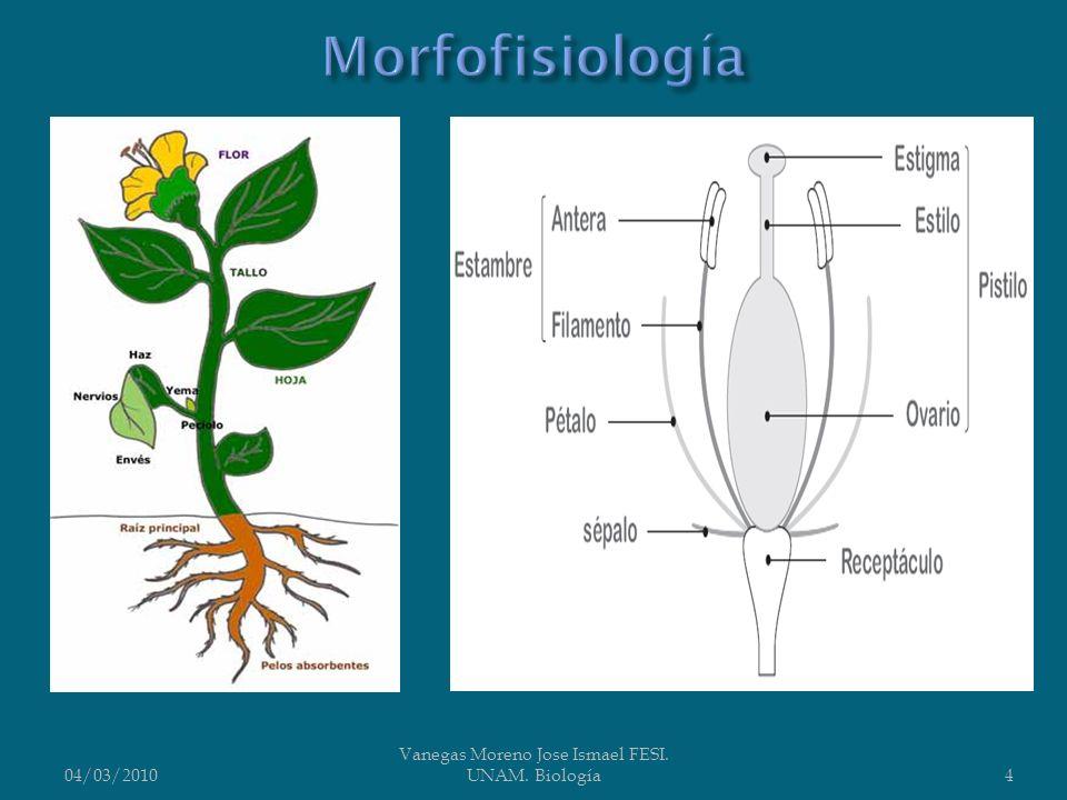 Plasticidad del cuerpo vegetativo, lo que permite encontrar formas vitales muy variadas, desde plantas adaptadas a vivir en los desiertos (xeromorfas), epifitas sobre los troncos de los árboles, lianas, etc.