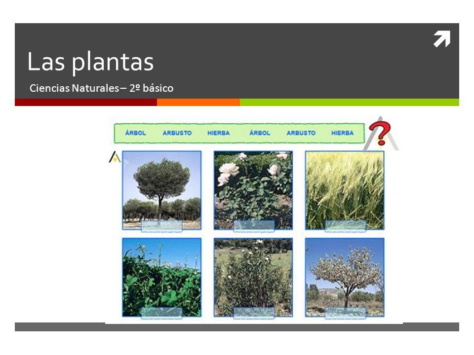 Las plantas Ciencias Naturales – 2º básico