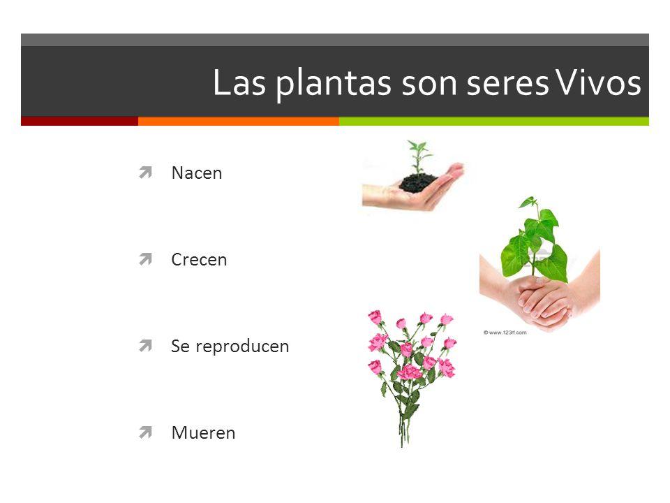Las plantas son seres Vivos Nacen Crecen Se reproducen Mueren