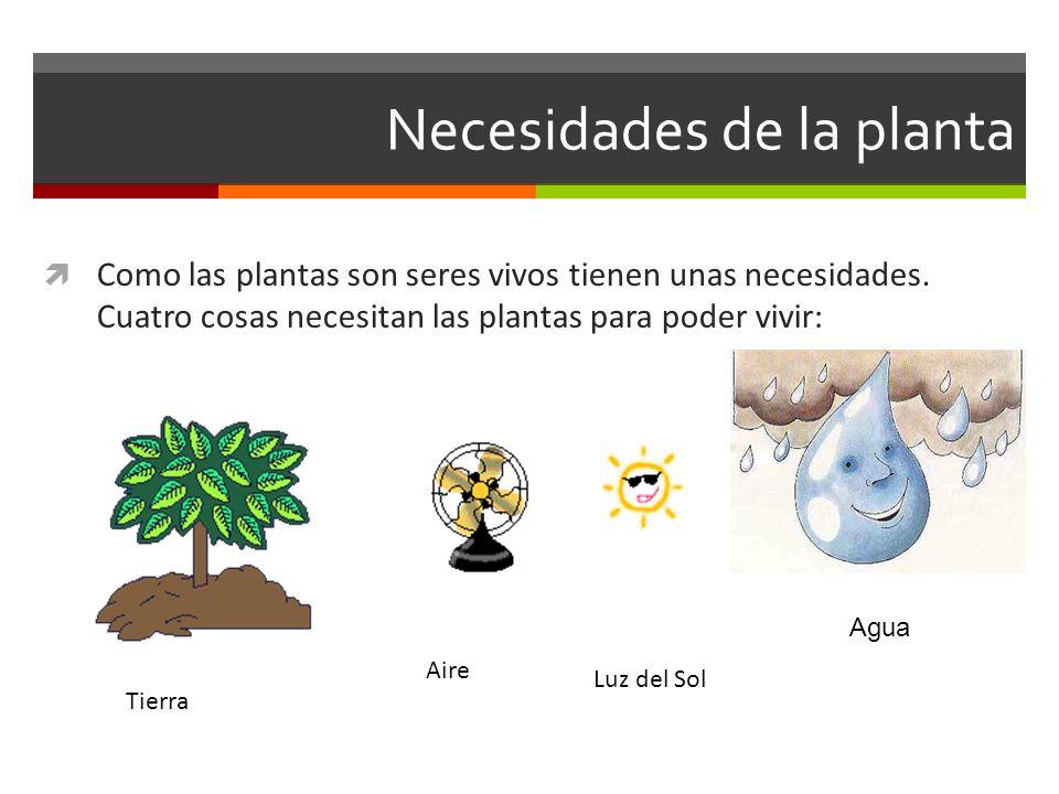 Necesidades de la planta Como las plantas son seres vivos tienen unas necesidades. Cuatro cosas necesitan las plantas para poder vivir: Tierra Aire Lu