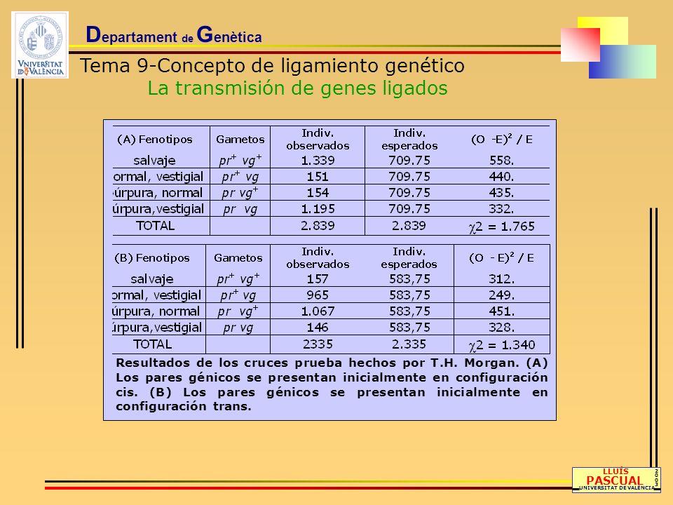 D epartament de G enètica Tema 9-Concepto de ligamiento genético Recombinación, distancia genética y mapa de ligamiento LLUÍS PASCUAL UNIVERSITAT DE VALÈNCIA 20032003 Se define la unidad de mapa genético (u.m.), también denominada centiMorgan (cM), como la distancia entre pares génicos para la cual uno de cada cien productos meióticos (gametos) es recombinante.
