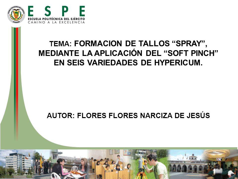TEMA: FORMACION DE TALLOS SPRAY, MEDIANTE LA APLICACIÓN DEL SOFT PINCH EN SEIS VARIEDADES DE HYPERICUM. AUTOR: FLORES FLORES NARCIZA DE JESÚS
