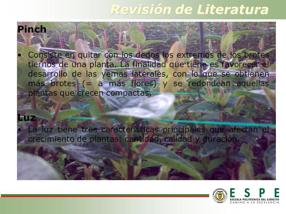 Revisión de Literatura Pinch Consiste en quitar con los dedos los extremos de los brotes tiernos de una planta.