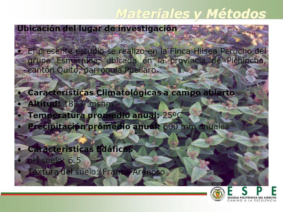 Materiales y Métodos Ubicación del lugar de investigación El presente estudio se realizo en la Finca Hilsea Perucho del grupo Esmeralda, ubicada en la provincia de Pichincha, cantón Quito, parroquia Puellaro.