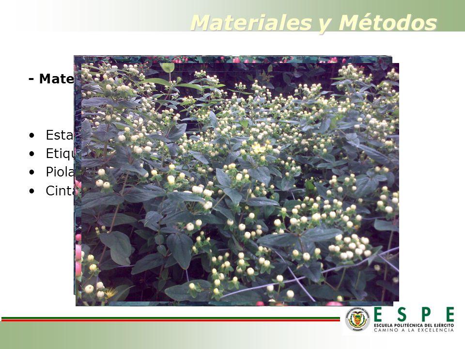 Materiales y Métodos - Materiales de campo. - Variedades Estacas Etiquetas Piola Cinta métrica ELITTE AMBER H016 RED ATTRACTION RED BARON PINK ATTRACT
