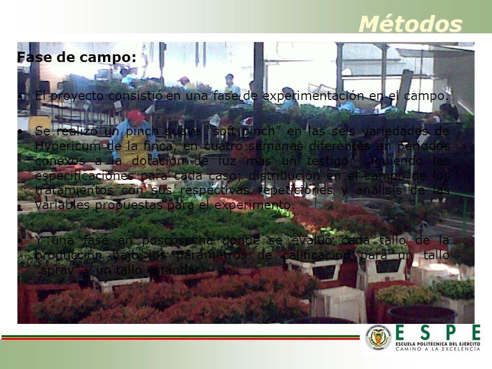 Métodos Fase de campo: El proyecto consistió en una fase de experimentación en el campo.