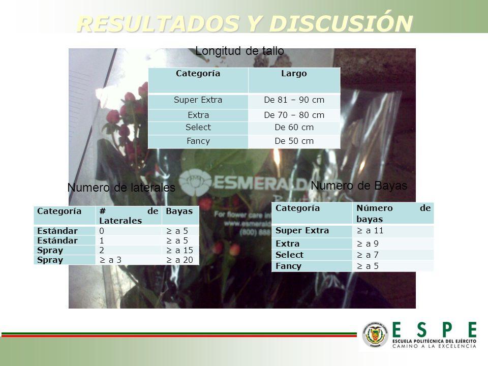 RESULTADOS Y DISCUSIÓN CategoríaLargo Super ExtraDe 81 – 90 cm ExtraDe 70 – 80 cm SelectDe 60 cm FancyDe 50 cm Categoría Número de bayas Super Extra a