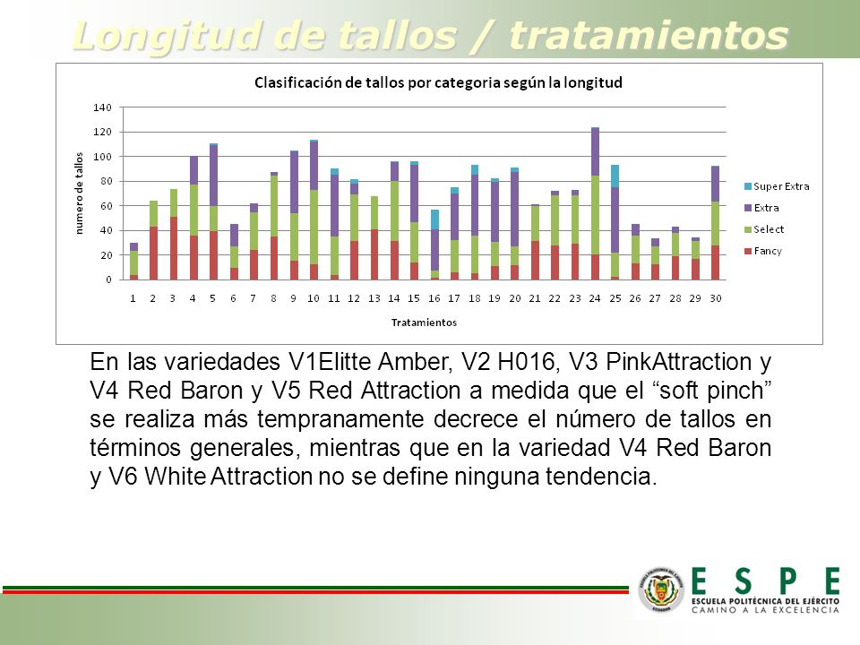 Longitud de tallos / tratamientos En las variedades V1Elitte Amber, V2 H016, V3 PinkAttraction y V4 Red Baron y V5 Red Attraction a medida que el soft pinch se realiza más tempranamente decrece el número de tallos en términos generales, mientras que en la variedad V4 Red Baron y V6 White Attraction no se define ninguna tendencia.