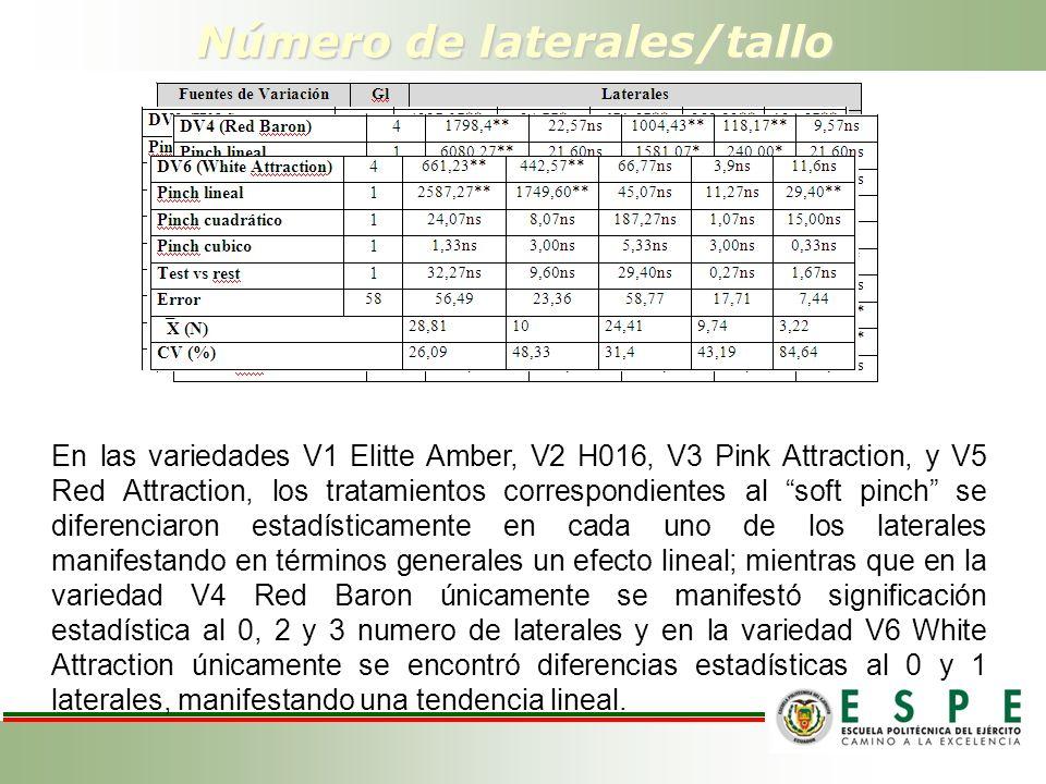 Número de laterales/tallo En las variedades V1 Elitte Amber, V2 H016, V3 Pink Attraction, y V5 Red Attraction, los tratamientos correspondientes al soft pinch se diferenciaron estadísticamente en cada uno de los laterales manifestando en términos generales un efecto lineal; mientras que en la variedad V4 Red Baron únicamente se manifestó significación estadística al 0, 2 y 3 numero de laterales y en la variedad V6 White Attraction únicamente se encontró diferencias estadísticas al 0 y 1 laterales, manifestando una tendencia lineal.