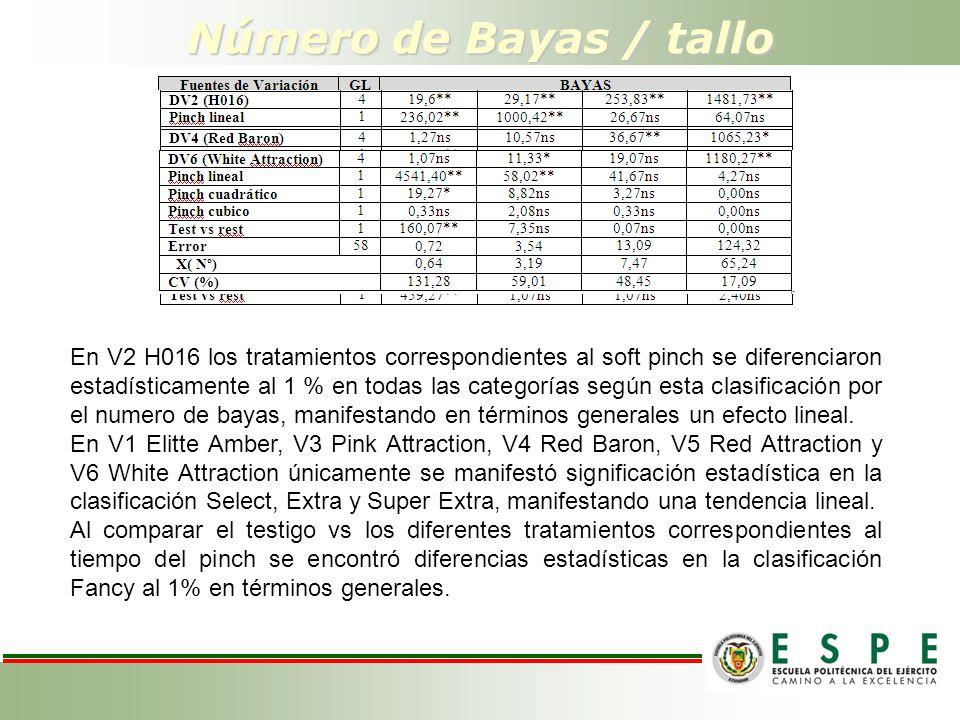 Número de Bayas / tallo En V2 H016 los tratamientos correspondientes al soft pinch se diferenciaron estadísticamente al 1 % en todas las categorías según esta clasificación por el numero de bayas, manifestando en términos generales un efecto lineal.