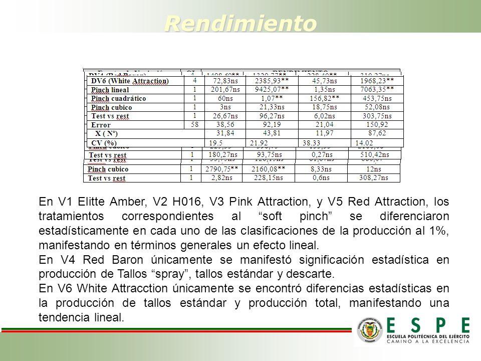 Rendimiento En V1 Elitte Amber, V2 H016, V3 Pink Attraction, y V5 Red Attraction, los tratamientos correspondientes al soft pinch se diferenciaron estadísticamente en cada uno de las clasificaciones de la producción al 1%, manifestando en términos generales un efecto lineal.