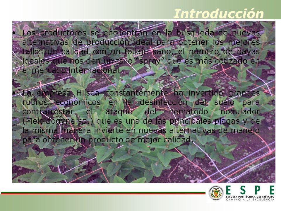 Introducción Los productores se encuentran en la búsqueda de nuevas alternativas de producción ideal para obtener los mejores tallos de calidad con un