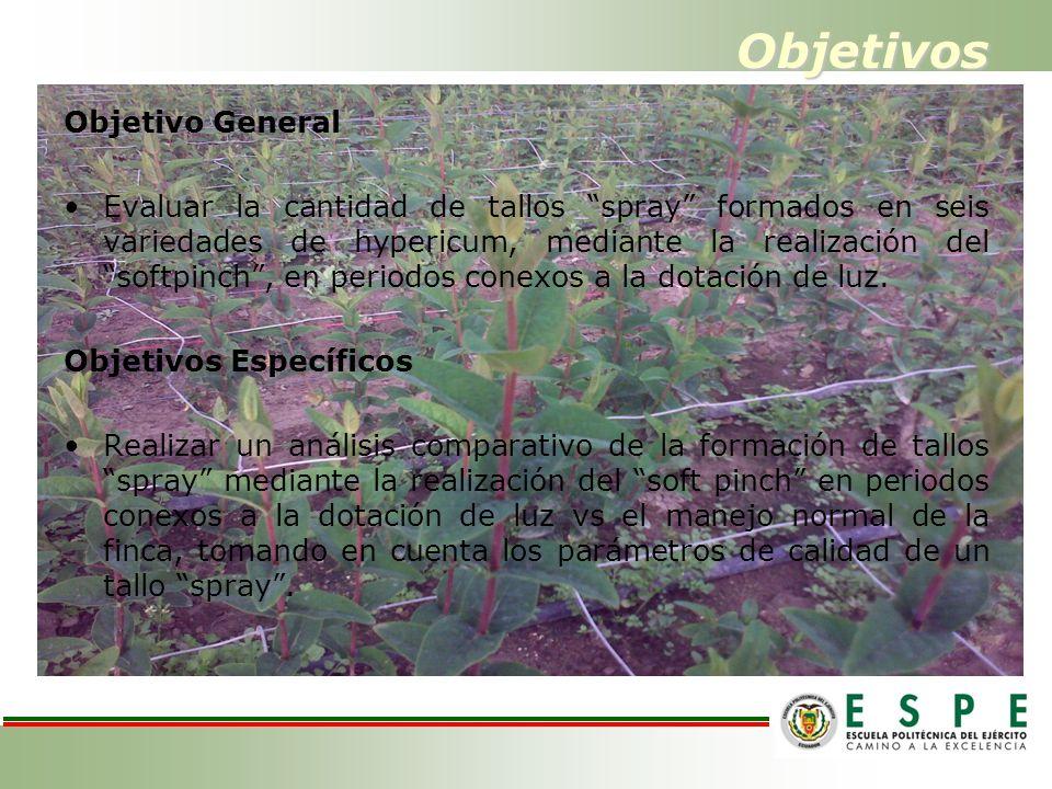 Objetivos Objetivo General Evaluar la cantidad de tallos spray formados en seis variedades de hypericum, mediante la realización del softpinch, en per