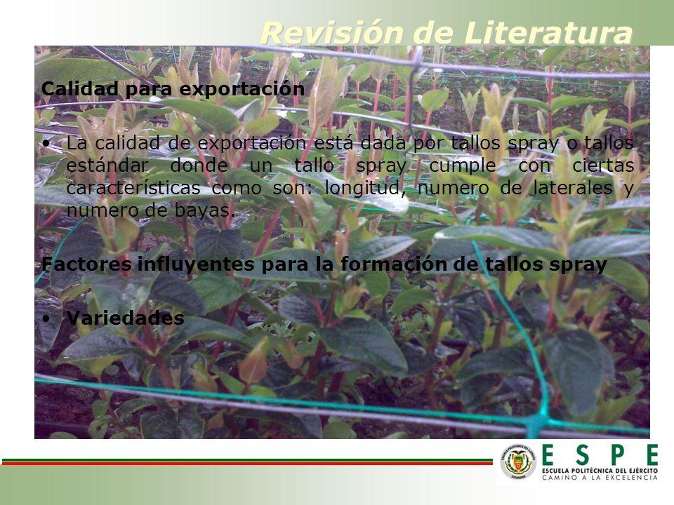 Revisión de Literatura Calidad para exportación La calidad de exportación está dada por tallos spray o tallos estándar donde un tallo spray cumple con