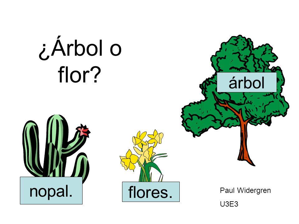 ¿Árbol o flor? nopal. flores. árbol Paul Widergren U3E3