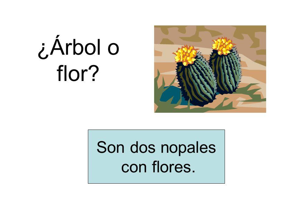 ¿Árbol o flor? Son dos nopales con flores.