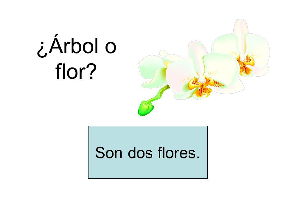 ¿Árbol o flor? Son dos flores.
