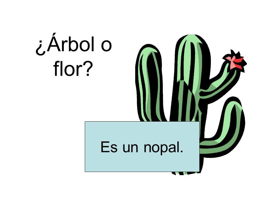 ¿Árbol o flor? Es un nopal.