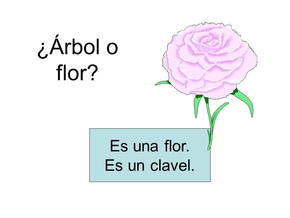 ¿Árbol o flor? Es una flor. Es un clavel.