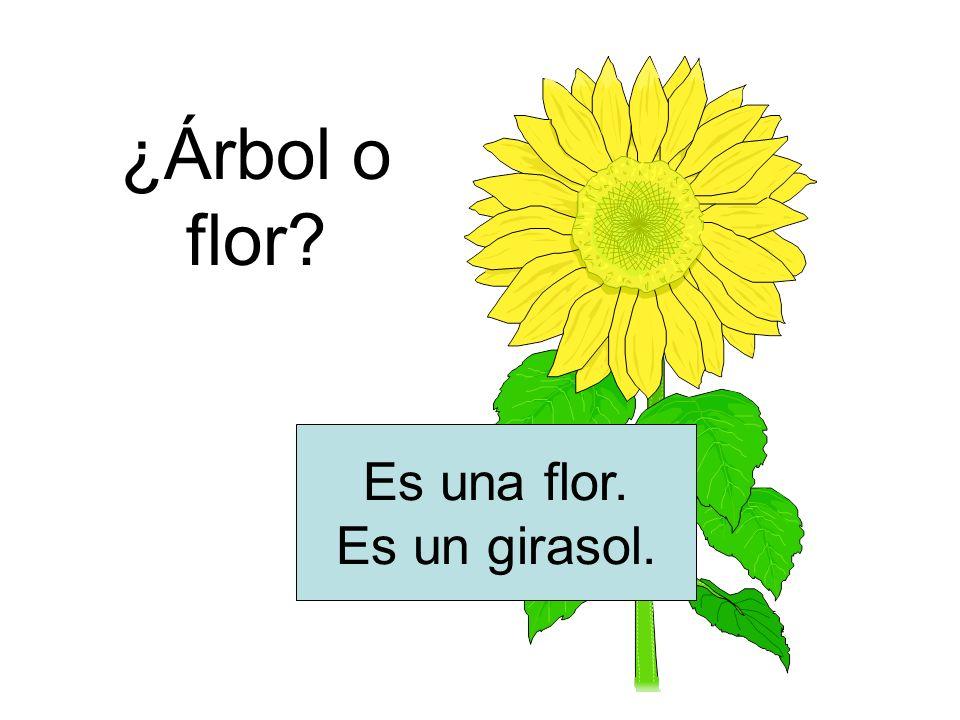 ¿Árbol o flor? Es una flor. Es un girasol.