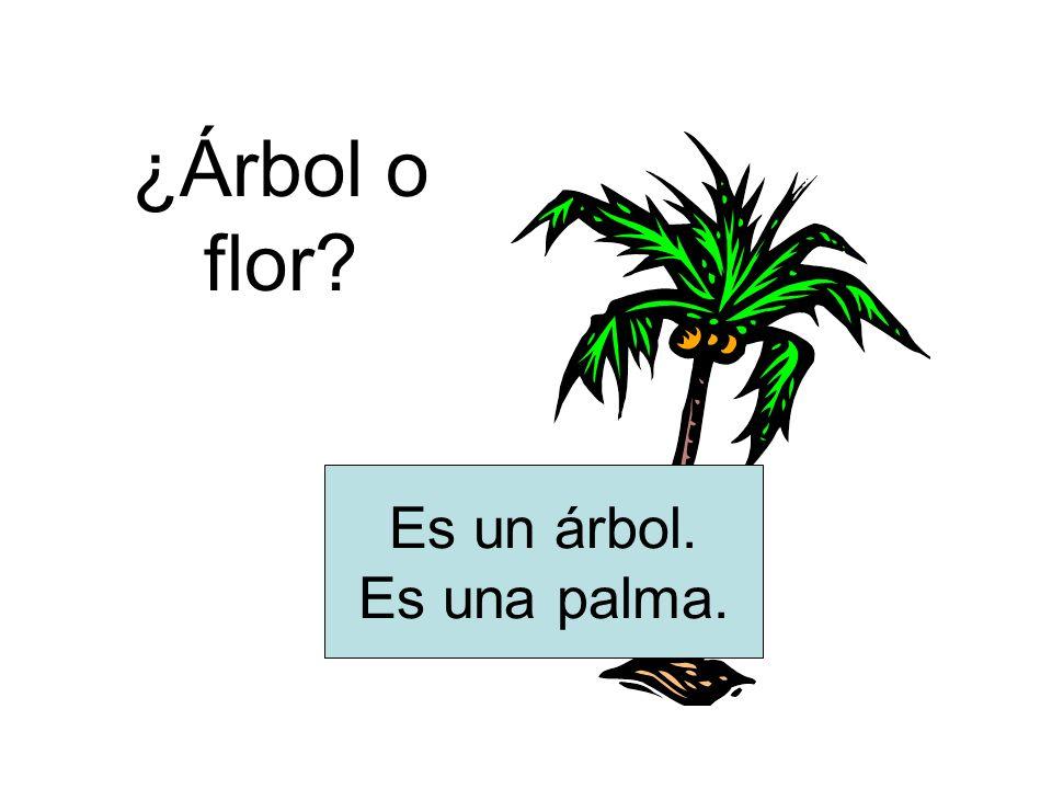 ¿Árbol o flor? Es un árbol. Es una palma.