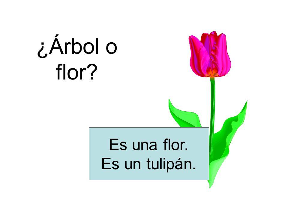 ¿Árbol o flor? Es una flor. Es un tulipán.