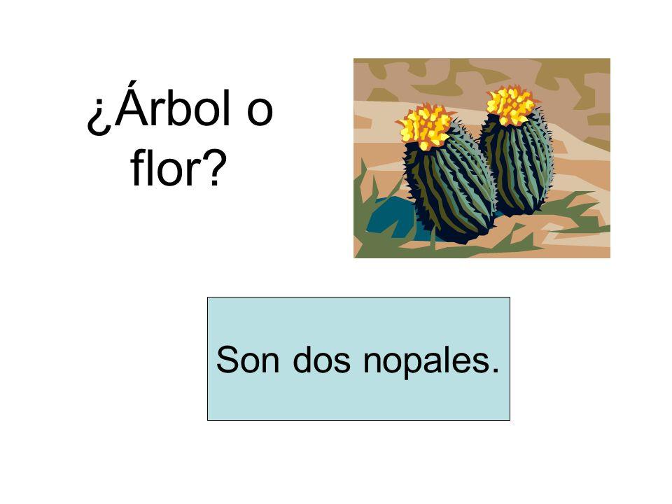 ¿Árbol o flor? Son dos nopales.