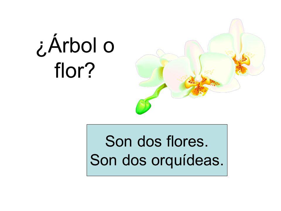 ¿Árbol o flor? Son dos flores. Son dos orquídeas.