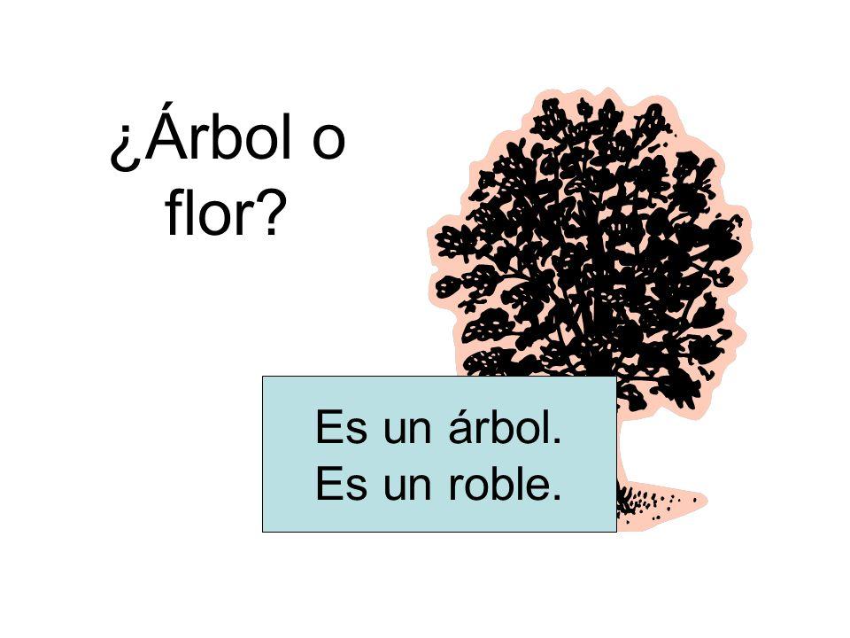 ¿Árbol o flor? Es un árbol. Es un roble.