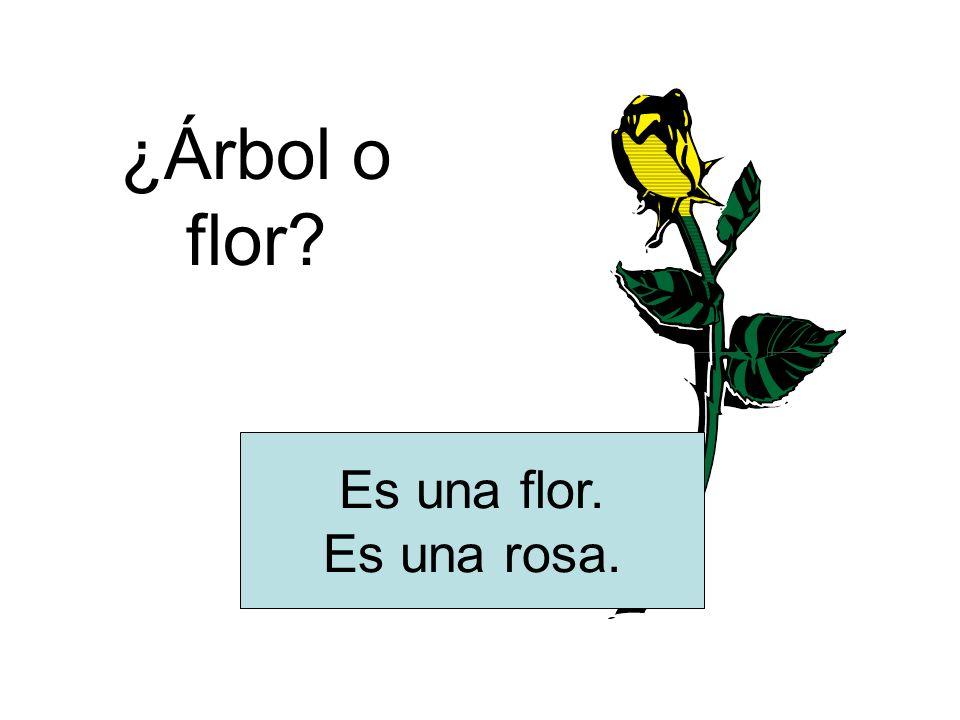 ¿Árbol o flor? Es una flor. Es una rosa.