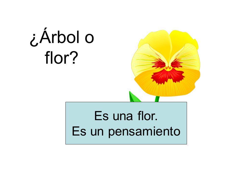 ¿Árbol o flor? Es una flor. Es un pensamiento
